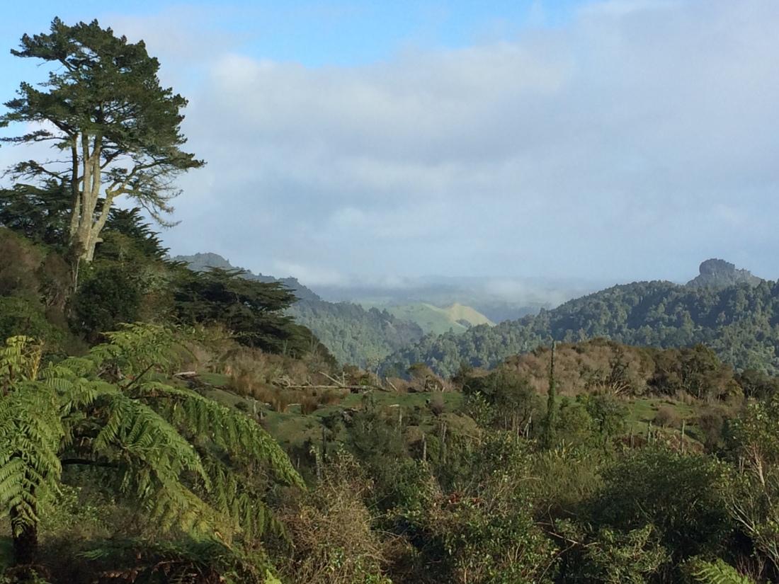 Drifting alone on a sea of white: Huntly to Waitomo (Te